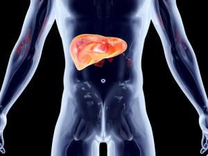 Leber, Nieren und die Lymphe sind häufig betroffen